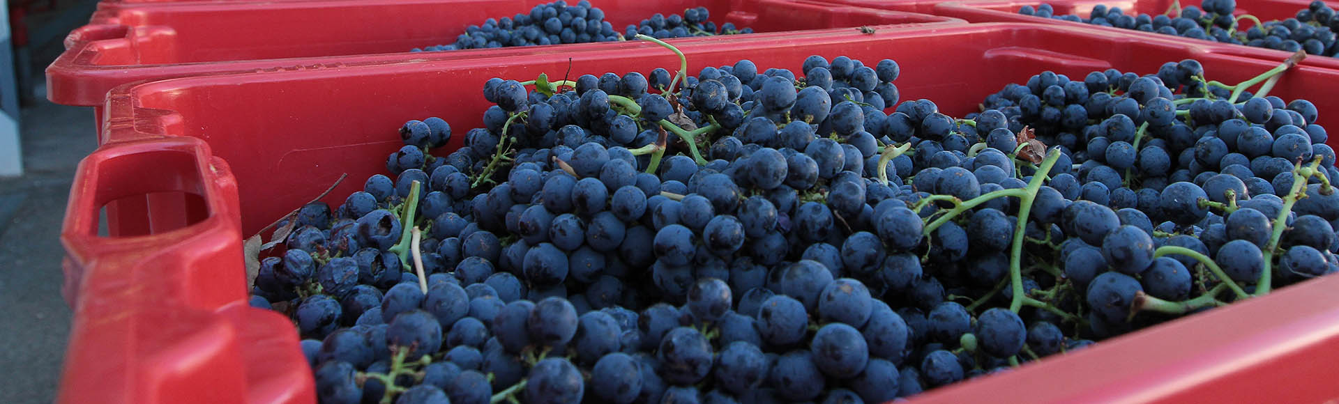 Du rosé fruité au rouge de longue garde, le savoir-faire du domaine viticole de l'Escarelle !